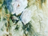site-de-roses-775x575.jpg